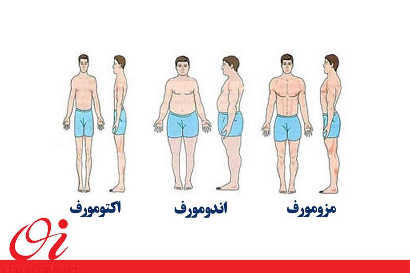 عضله سازی و متابولیسم بدن